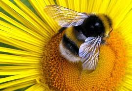 Image result for plant pollination