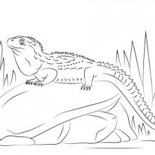 Small Picture Tuatara Animal Coloring Pages Click The Common Collared Lizard To