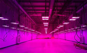 Demystifying Lumens Lux And Par 2019 Lumigrow Learning