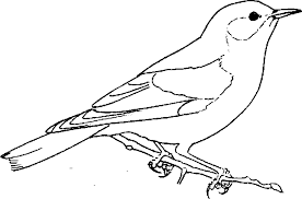 Small Picture Unique Blue Bird Coloring Pages 32 In Gallery Coloring Ideas with