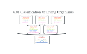 6 01 Classifications Of Living Organisms By Christine J On