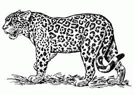 Small Picture Jaguar Coloring Pages Coloring Home