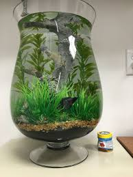 betta fish tanks. Wonderful Tanks Idea For Indoor Water Garden But Without The Fish In Betta Fish Tanks M