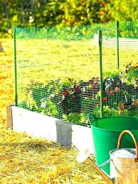 keeping rabbits out of the garden natural fence options ideas to keep keeping rabbits out of the garden