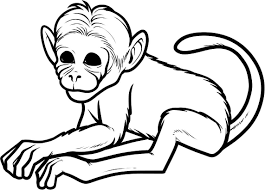 Coloring: Spider Monkey Coloring Page