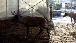 reindeer at whitehall garden centre bristol