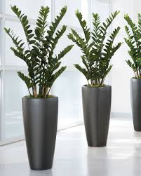 artificial plants for office decor. Exotic 4\u0027 ZZ Silk Plant Artificial Plants For Office Decor