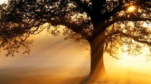 Image result for tree picture