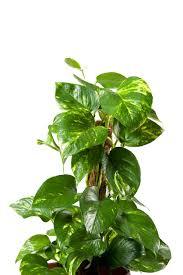 Secondo questo principio, le piante vanno annaffiate soltanto quando il composto da vaso è completamente asciutto. Le 15 Piante Da Interno Super Resistenti Prima Parte Fito Piante Da Interno Piante D Appartamento Piante Da Appartamento