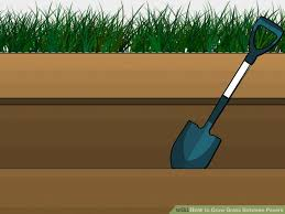 image titled grow grass between pavers step 1