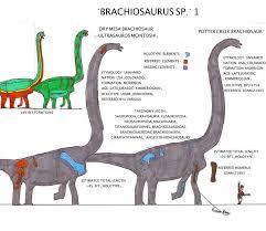 brachiosaurus size brachiosaurus sp i skeletals by bricksmashtv on deviantart
