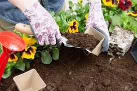 Paper Flower Pots Hands Of Gardener Woman Putting Soil Into A Paper Flower Pot