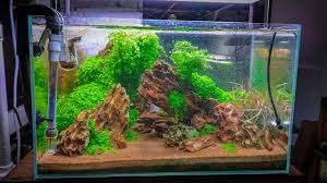 Best Low Light Carpet Plant Top 5 Easy Carpeting Aquarium Plants