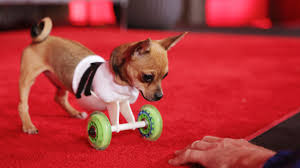 Tiny Mics, A Dog In A 3-D Printed Wheelchair, Emcee Who Barks: Its TE
