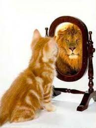 Image result for lion and mirror
