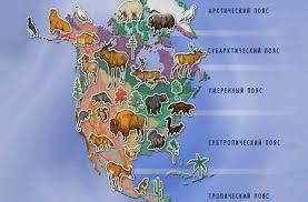 Животные Северной Америки Названия описания и фото животных  Животные Северной Америки Названия описания и фото животных