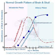 Brain Growth In Children