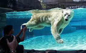 Kết quả hình ảnh cho Singapore Zoo