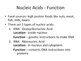 Functions Of Nucleic Acids Proteins And Nucleic Acids Nucleic Acids Function Food