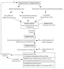 Renin Angiotensin Aldosterone System Renin Angiotensin