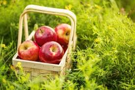 green and red apples in basket. fresh tasty red apples in wooden basket on green grass and u
