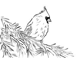 Small Picture Cardinal Coloring Page And glumme