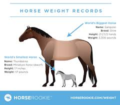 Miniature Horse Weight Chart How Much Does A Horse Weigh Fun Facts Calculator Faqs