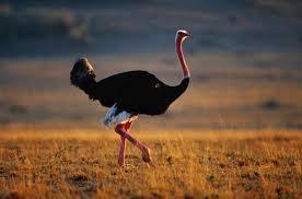 Resultado de imagen para el ave mas grande