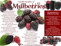 Survival Plant Profile Mulberries  The Survival GardenerMulberry Tree No Fruit