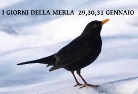 Gennaio sta per terminare arrivano i GIORNI DELLA MERLA - Il ...
