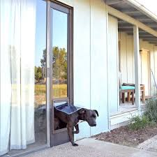 large size of great dane forum dog door petsafe freedom aluminum patio panel sliding glass pet