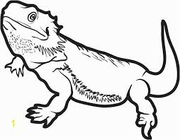 Bearded Dragon Coloring Pages Zabelyesayancom