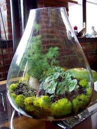 Terrarium Plants Ideas for Home Decoration