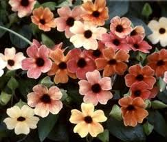 Climbing Plants For Fences Nz 20 Green Fence Designs Plants To Wall Climbing Plants Nz