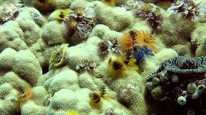 Bluefin Tuna ConservationUnderwater Photography GuideChristmas Tree Worm Facts