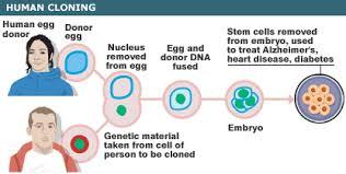 cloning benefits mankind essay case study custom essay cloning essays