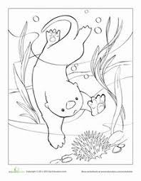 Small Picture Sea Otter Eating Sea Urchin coloring page from Otters category
