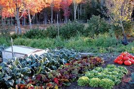 13 Quick Growing Vegetables For Your Fall Garden  Eat LocoFall Garden Crops