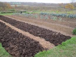 the prepared no dig beds