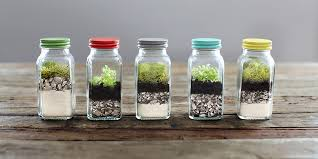 unique terrarium ideas succulents diy glass planters unique wedding favors