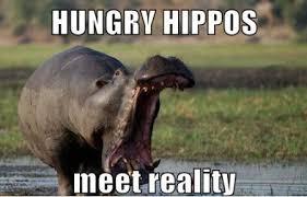 FunniestMemes.com - Funniest Memes - [Hungry Hippos Meet Reality...] via Relatably.com