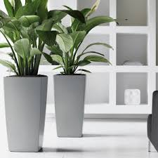 plants for office space. delighful office the benefits of indoor plants in office spaces with for space paperblog
