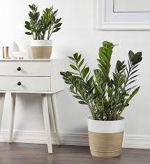 6 best low light indoor plants low