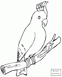 106 best Parrot coloring pages images on Pinterest   Coloring as well cockatoos   coloringbooks7 furthermore  moreover Coloring Pages Of Galahs Birds  Coloring  Best Free Coloring Pages further macaws that you can print pictrues   Free Printable Parrot furthermore cockatoos Cockatoo birds coloring pages   colorpages7 together with Children's Activities on Bluebirds likewise adult umbrella bird coloring page umbrella bird coloring sheet besides  furthermore  likewise . on coloring pagesof galas birds