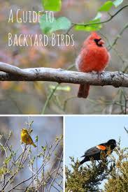 Best 25 Identify Birds Ideas On Pinterest  Bird Identification Backyard Bird Watch