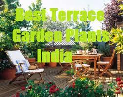 best garden plants. Best Terrace Garden Plants India