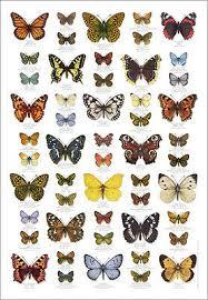 British Butterflies Butterfly Identification Poster 7 95