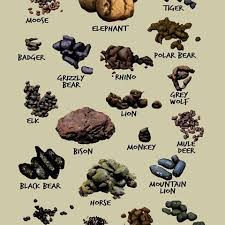 Pest Dropping Identification Chart Image Result For Animal Scat Identification Animal Tracks