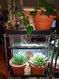 Succulent Grow Light Setup Cactus And Succulents Forum Grow Light Information And
