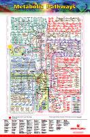 Iubmb Nicholson Metabolic Pathways Chart Iubmb Nicholson Metabolic Pathways Chart
